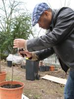 Mahmud grafting at Edible Landscapes London